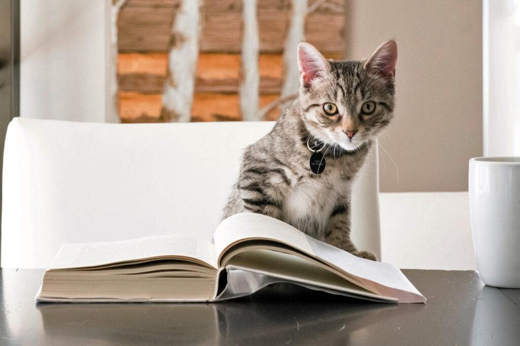 ブログの文章力がない人が教科書にすべき「新しい文章力の教室」の紹介